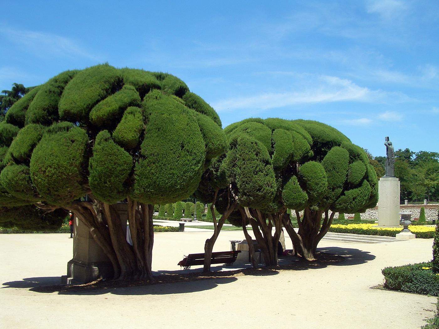 Retiro Madrid Dr Suess Trees
